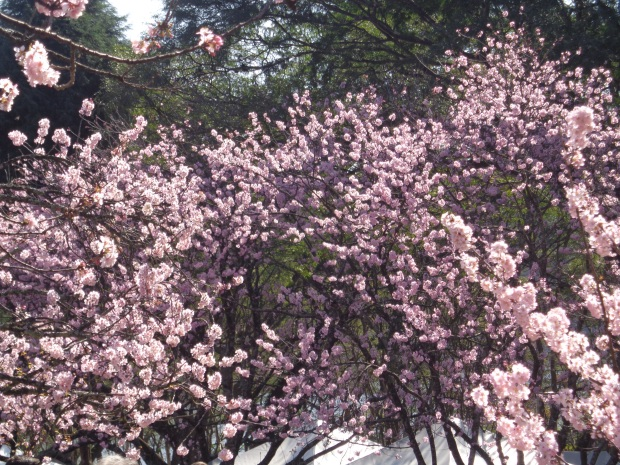 festa-das-cerejeiras-lembrancas-da-gabi-blog02