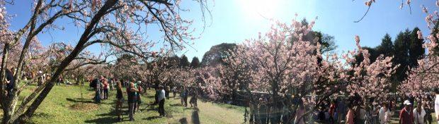 festa-das-cerejeiras-lembrancas-da-gabi-blog04