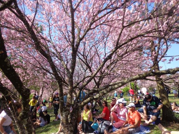 festa-das-cerejeiras-lembrancas-da-gabi-blog06