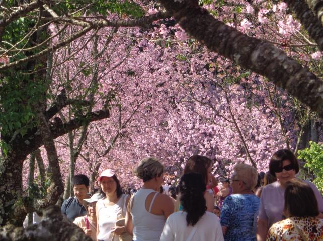 festa-das-cerejeiras-lembrancas-da-gabi-blog07