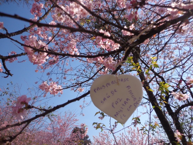 festa-das-cerejeiras-lembrancas-da-gabi-blog08