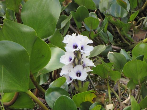 jardim-botanico-sp-lembrancas-da-gabi-2.JPG