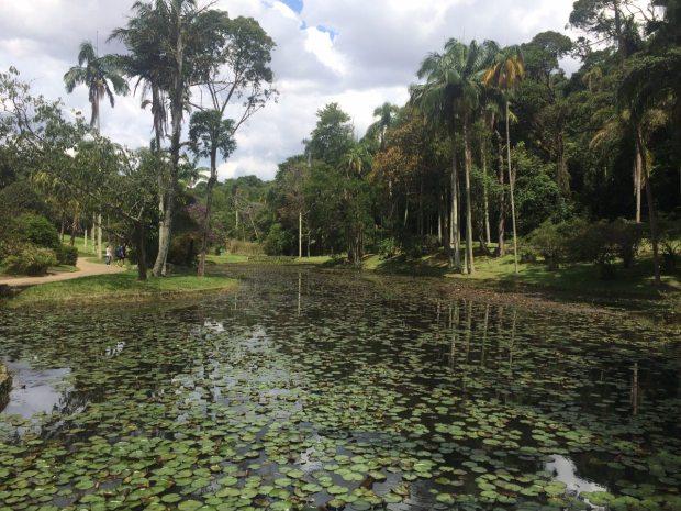 jardim-botanico-sp-lembrancas-da-gabi-6