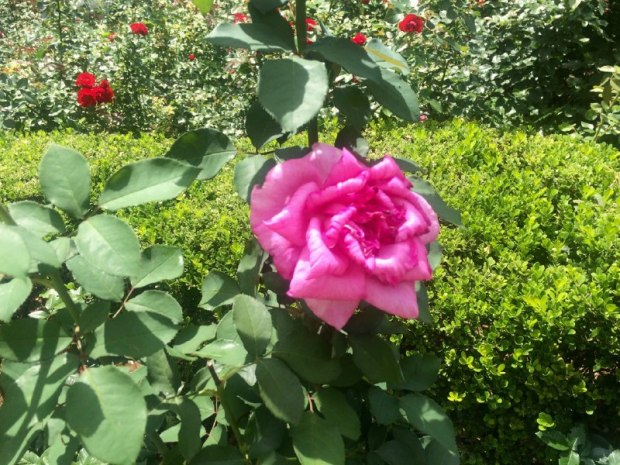 casa-das-rosas-lembrancas-da-gabi-blog8