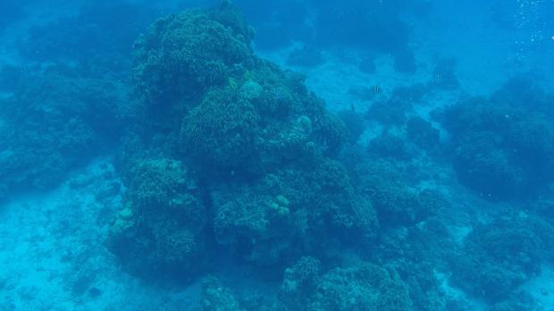 snorkel-lembrancas-da-gabi-blog2