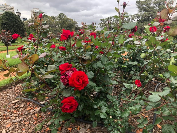 rosedal-palermo-lembrancas-da-gabi-blog6
